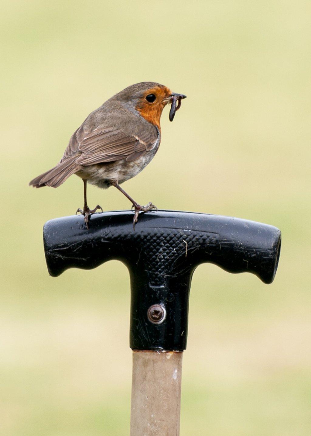 Home bird - 5-05 by barrowlane