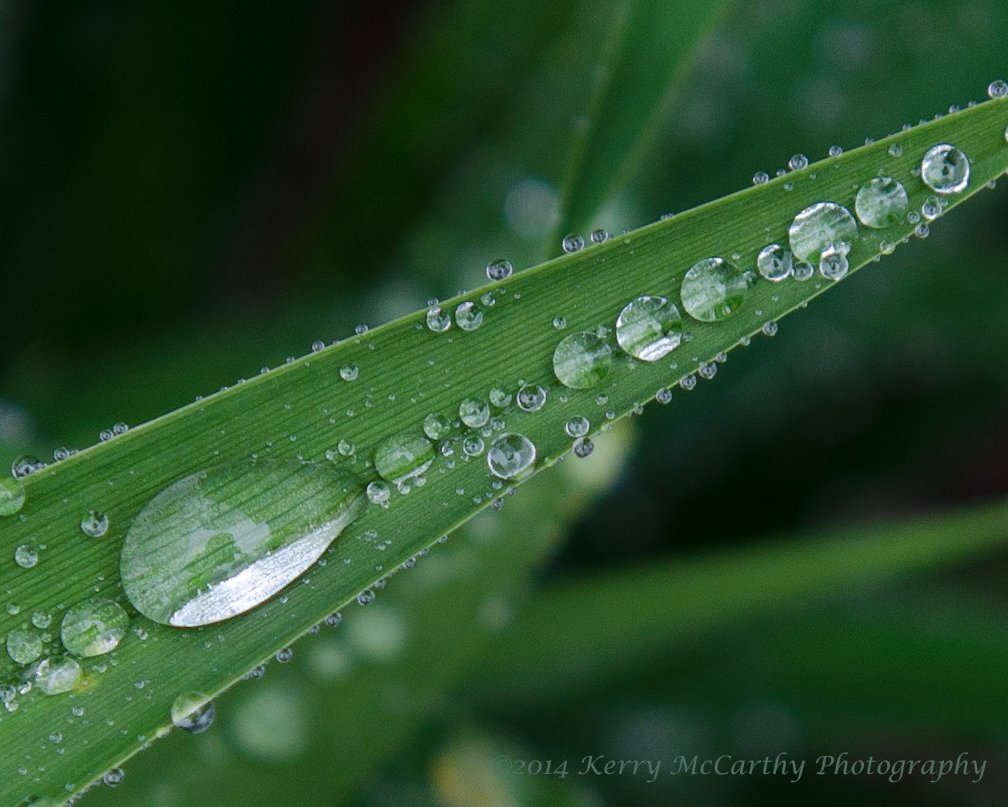 Raindrops by mccarth1