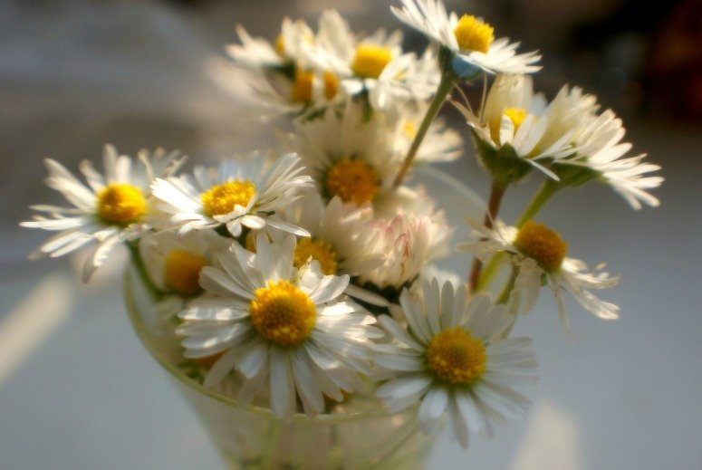 A fistful of daisies by filsie65