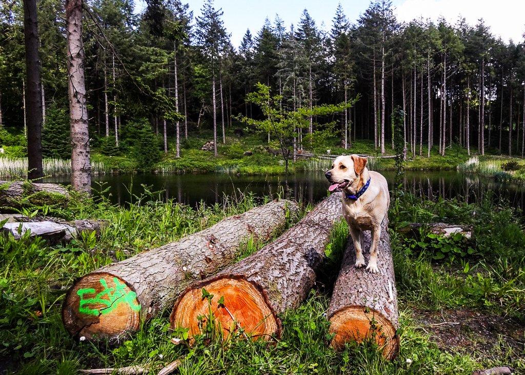 Emma on a log - 25-05 by barrowlane