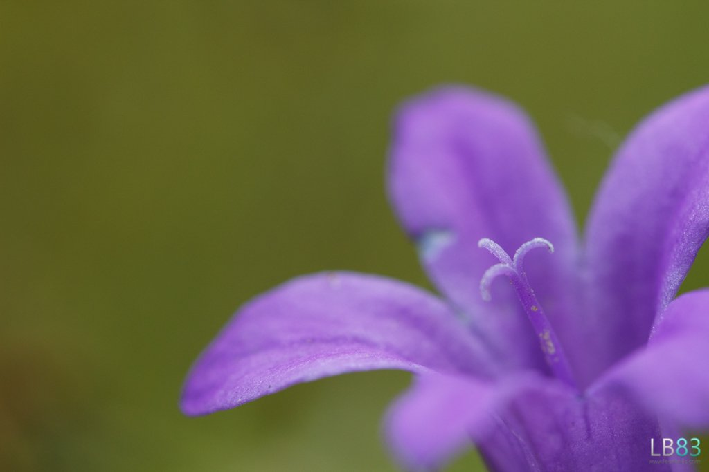 Little Purple Flower by leonbuys83
