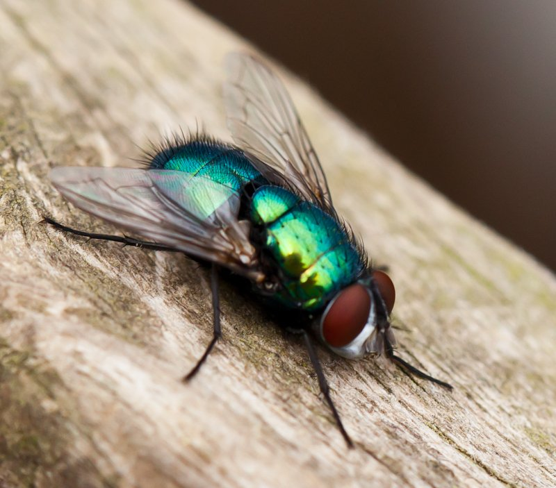 26th June 2014 - The Fly by pamknowler
