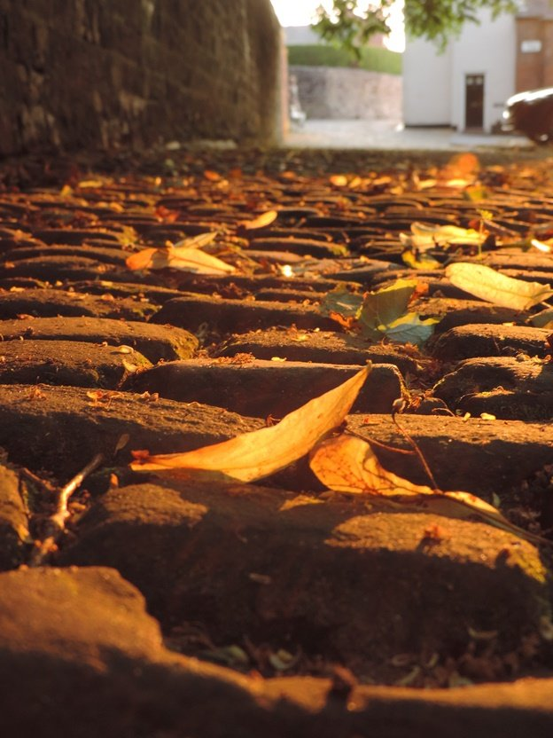 Paved with Gold by roachling