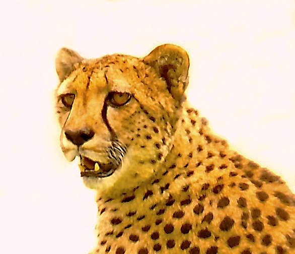 Cheetah Face by joysfocus