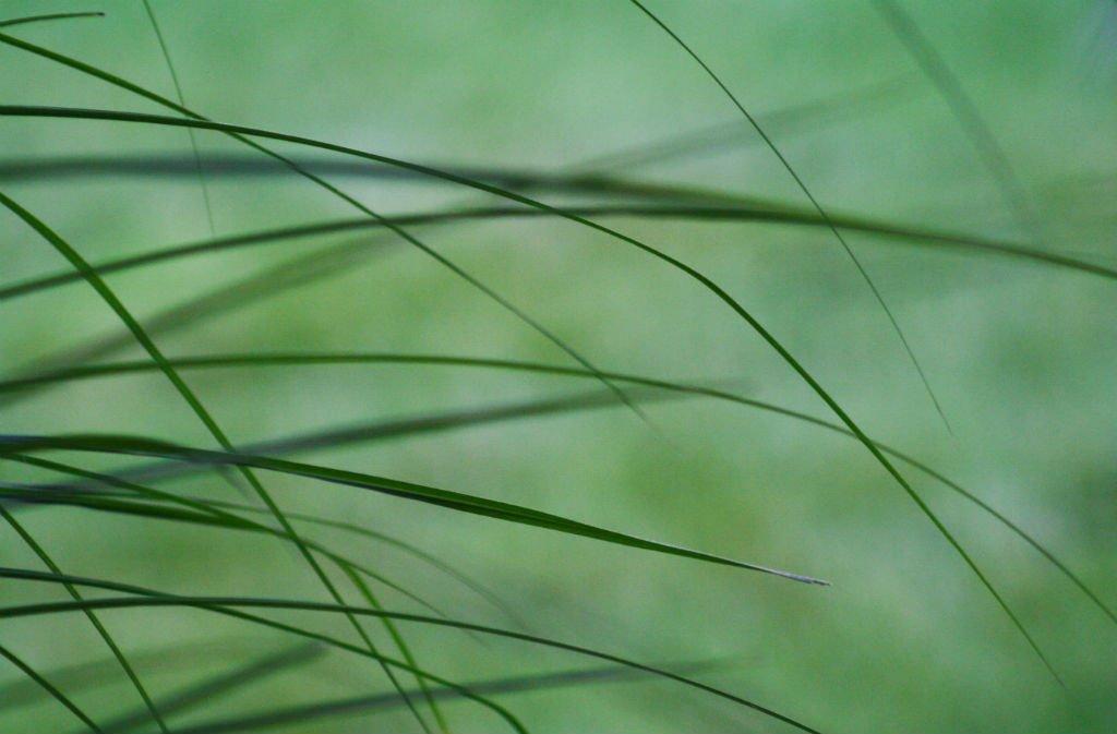 Grass by mittens