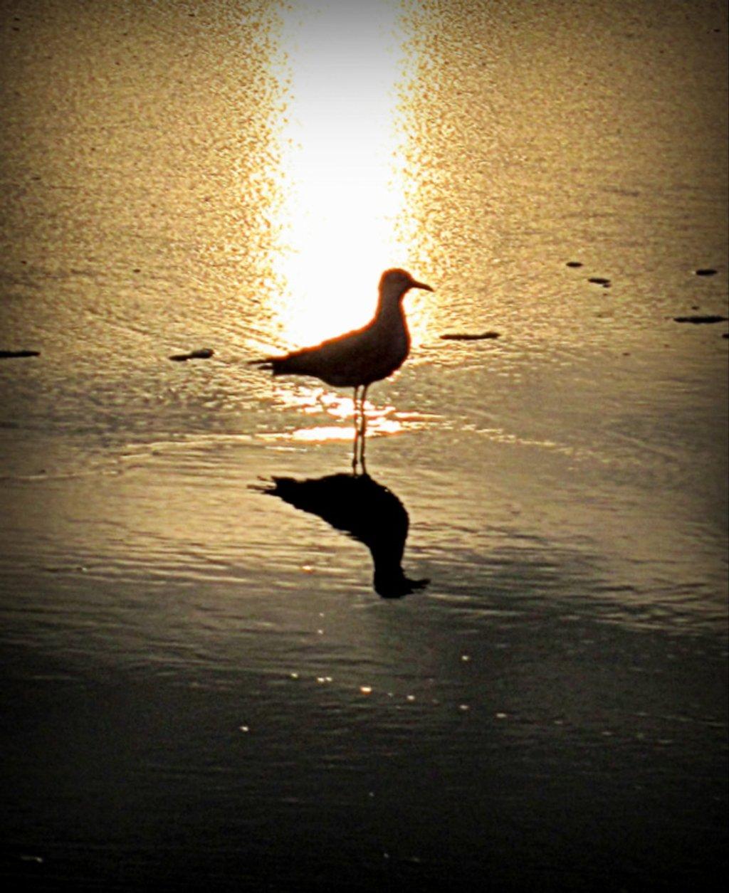 Early bird---:) by joemuli