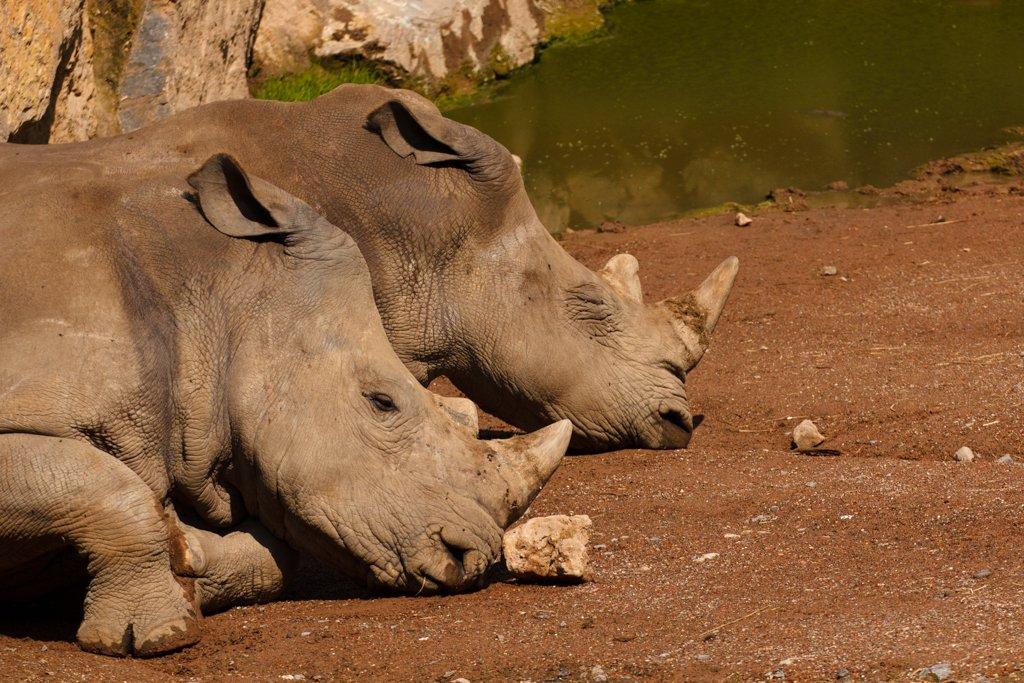 World Rhino Day by leonbuys83