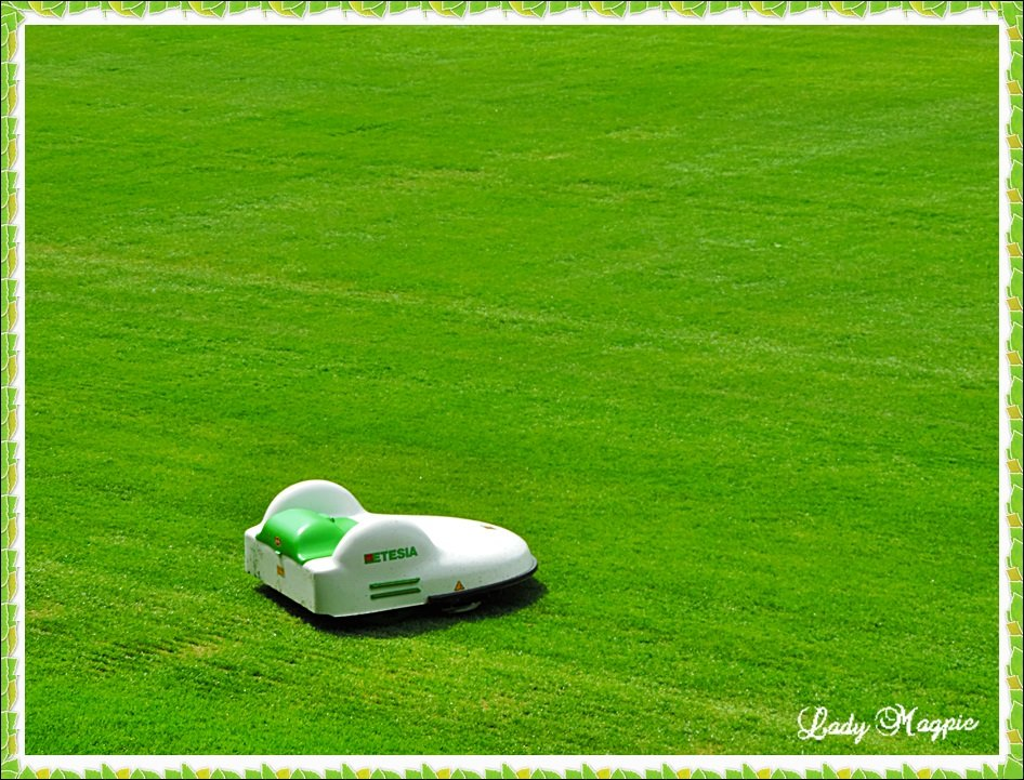Yummy - Grass. by ladymagpie