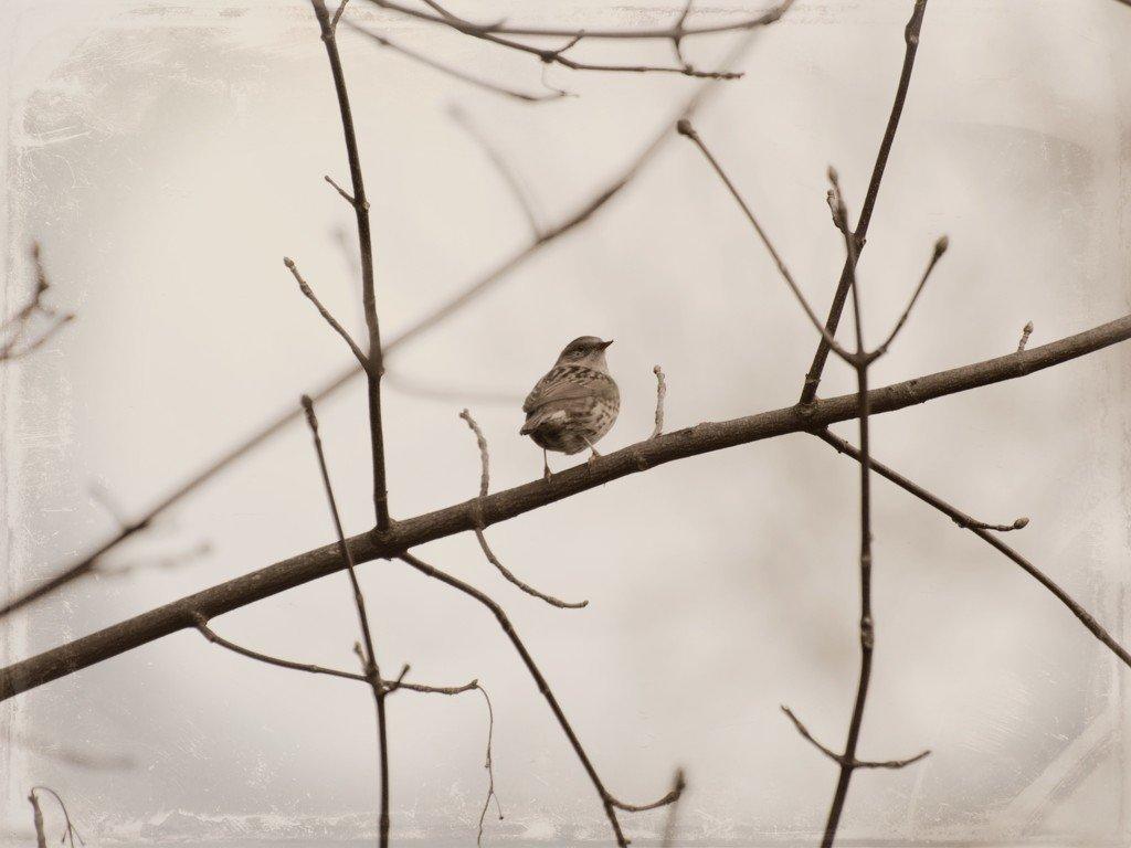 4/7 Wildlife by overalvandaan