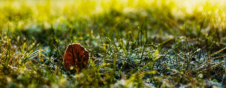 Frost on the ground by elisasaeter