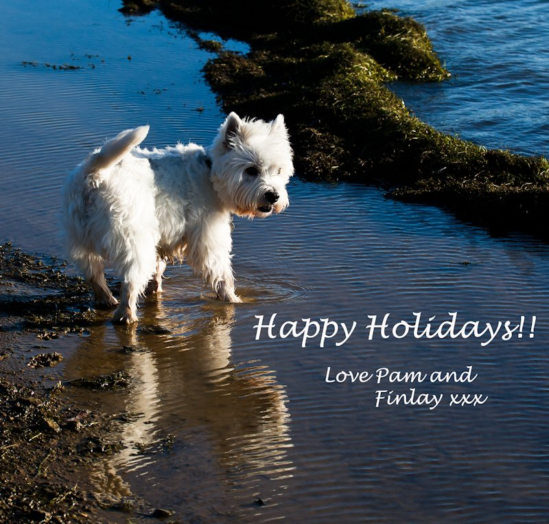 24th December 2014 - Happy Holidays to you all!! by pamknowler