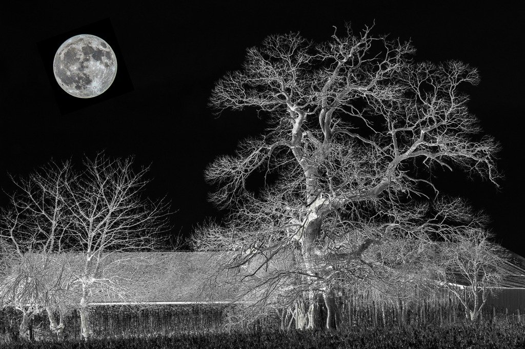 The Moon Tree... by vignouse