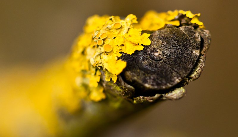 1st February 2015 - Lichen by pamknowler