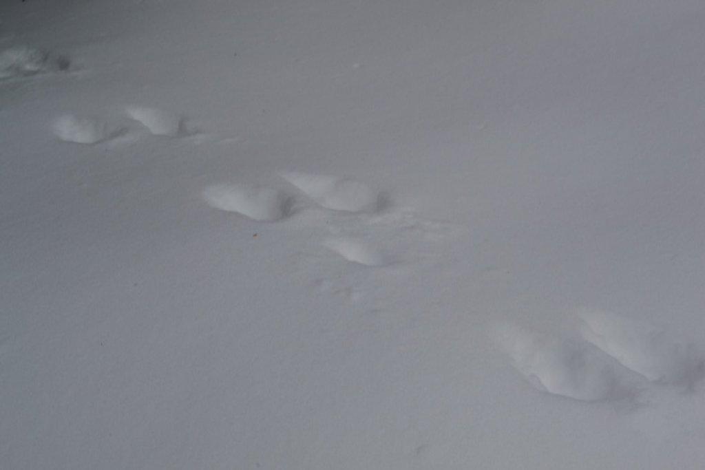 bunny trail by meemakelley