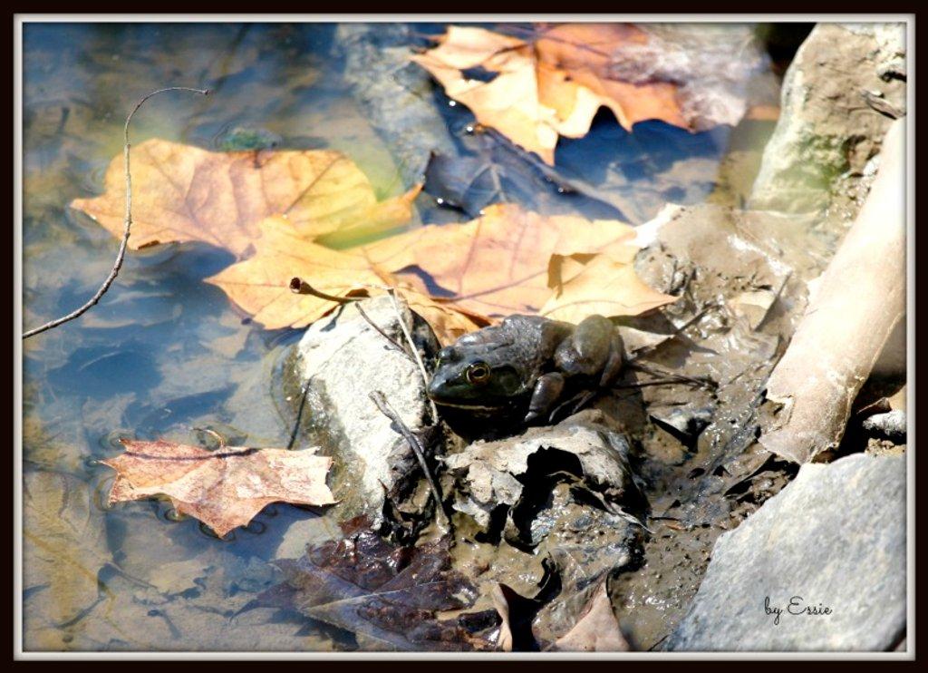 Mr. Frog by essiesue
