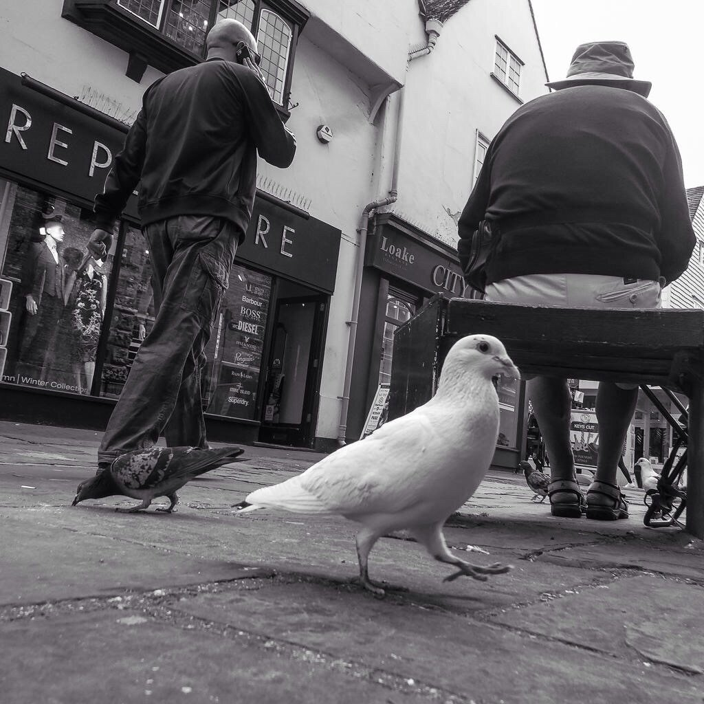 Pigeon toed by barrowlane