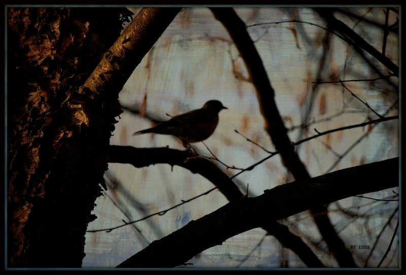 Bird In Tree by essiesue