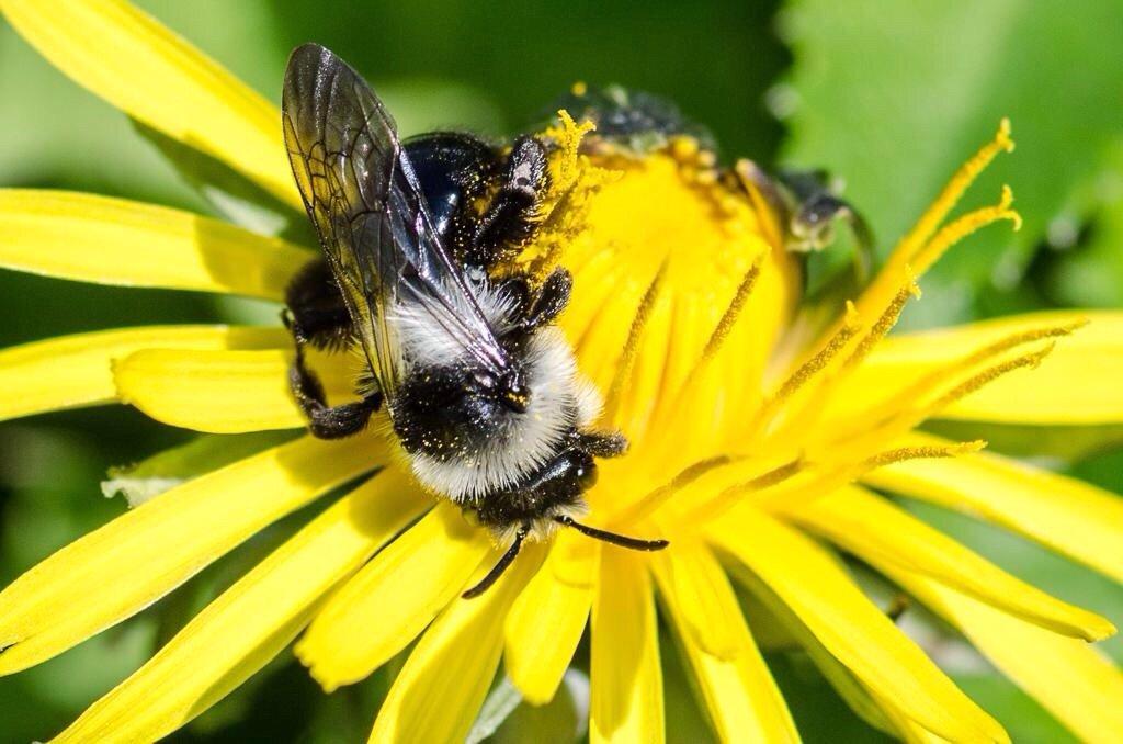 Grey bee by barrowlane