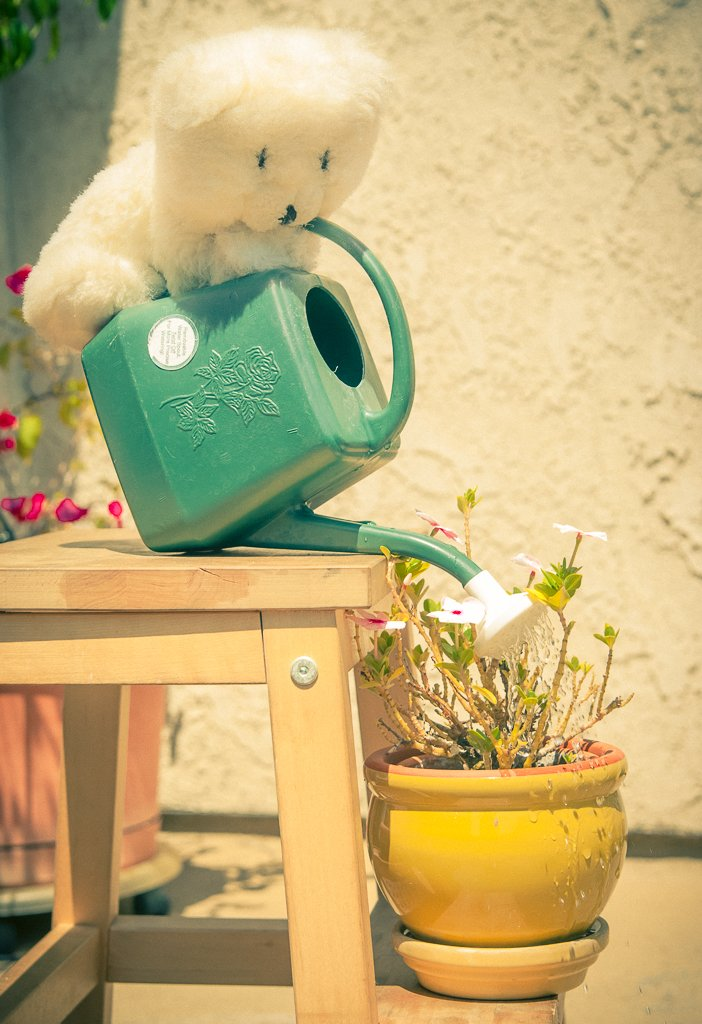 (Day 95) - Polar Bear & His Garden by cjphoto