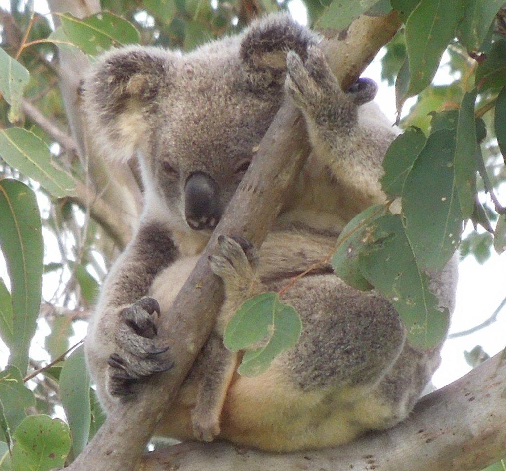 Hang loose by koalagardens