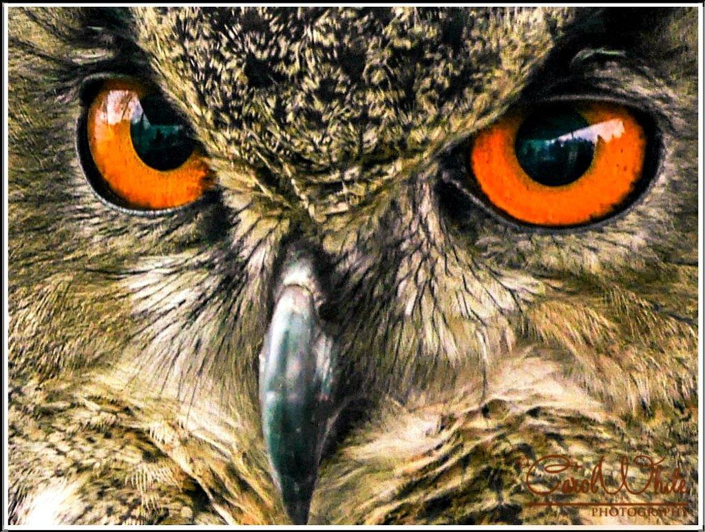 The Eyes Have It by carolmw
