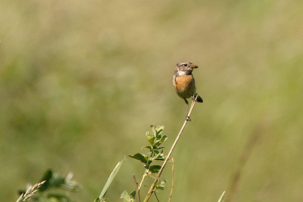 Bird with catch by leonbuys83