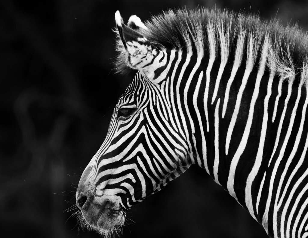 Stripes in Black & White by leonbuys83