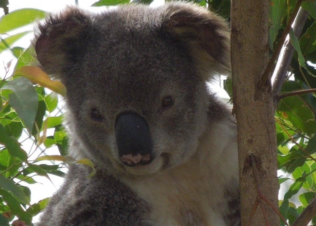 peek-a-boo by koalagardens