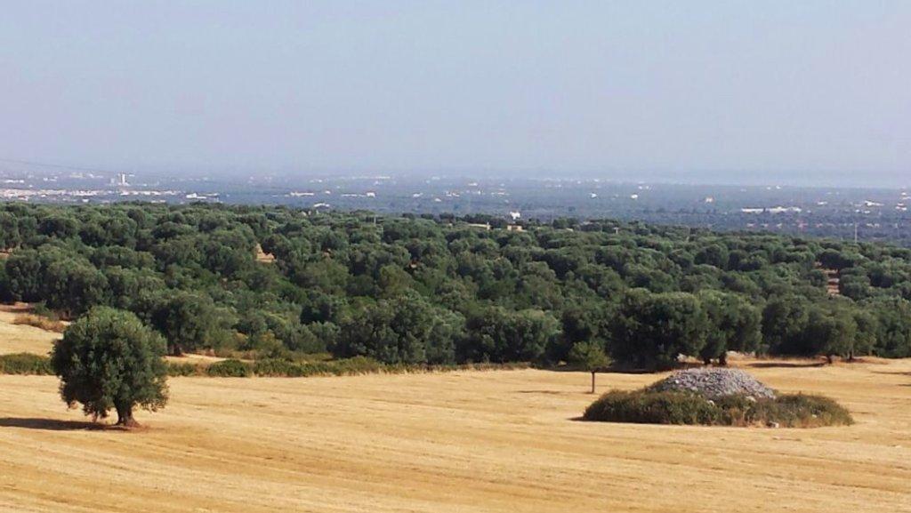 Apulian landscape by mara19500