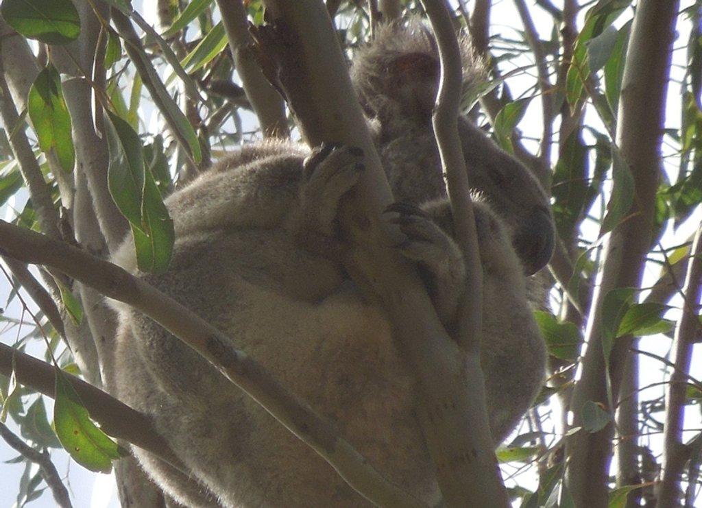 snug by koalagardens