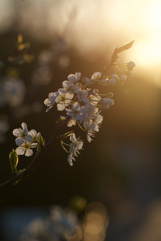 A taste of spring at sunset*** by lwain