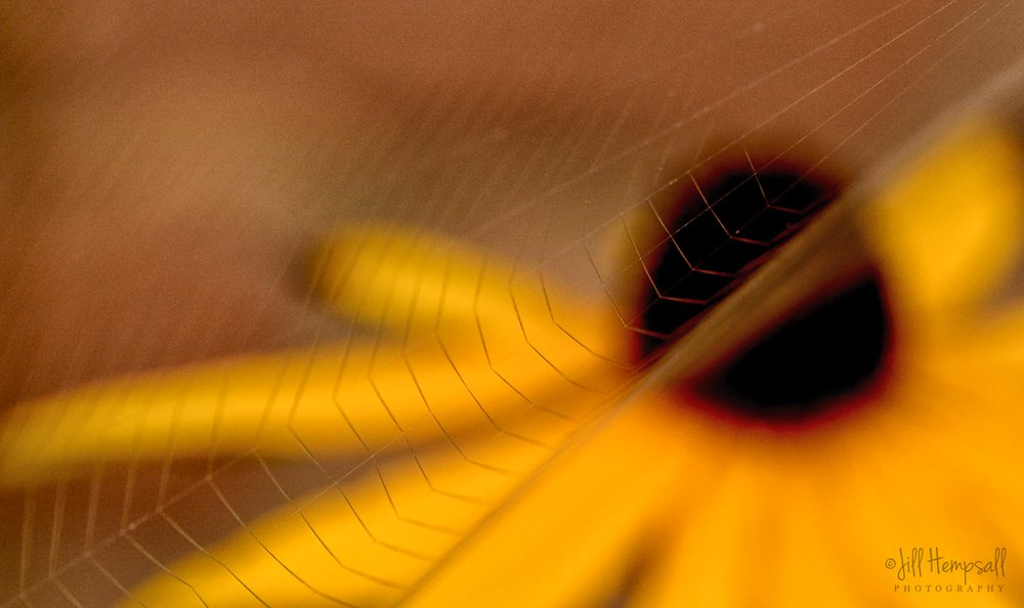 Cobweb but no dewdrops by jillhempsall