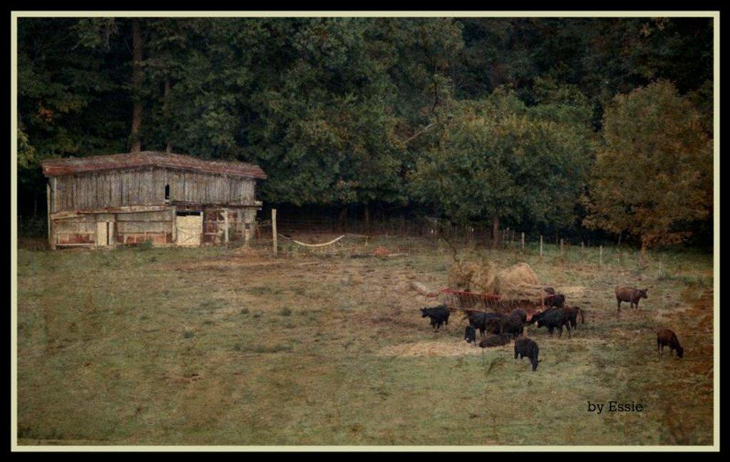Farm Scene by essiesue