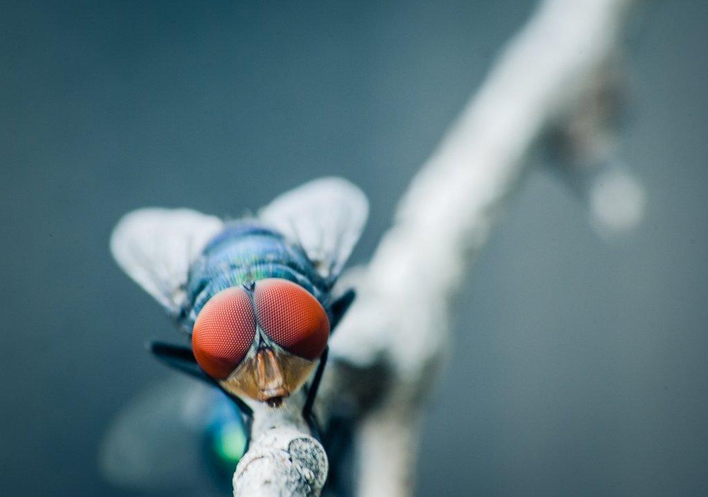 (Day 224) - FlyDay by cjphoto