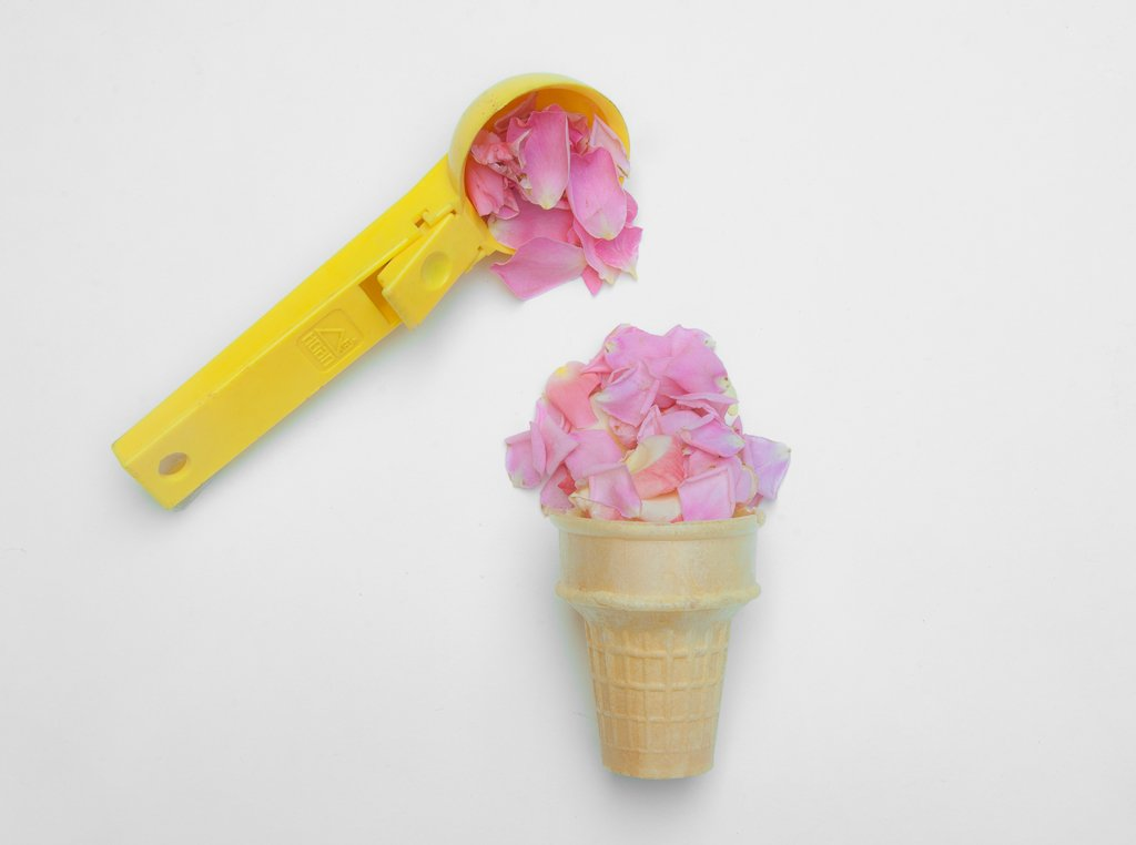 (Day 230) - Rose Scoop by cjphoto