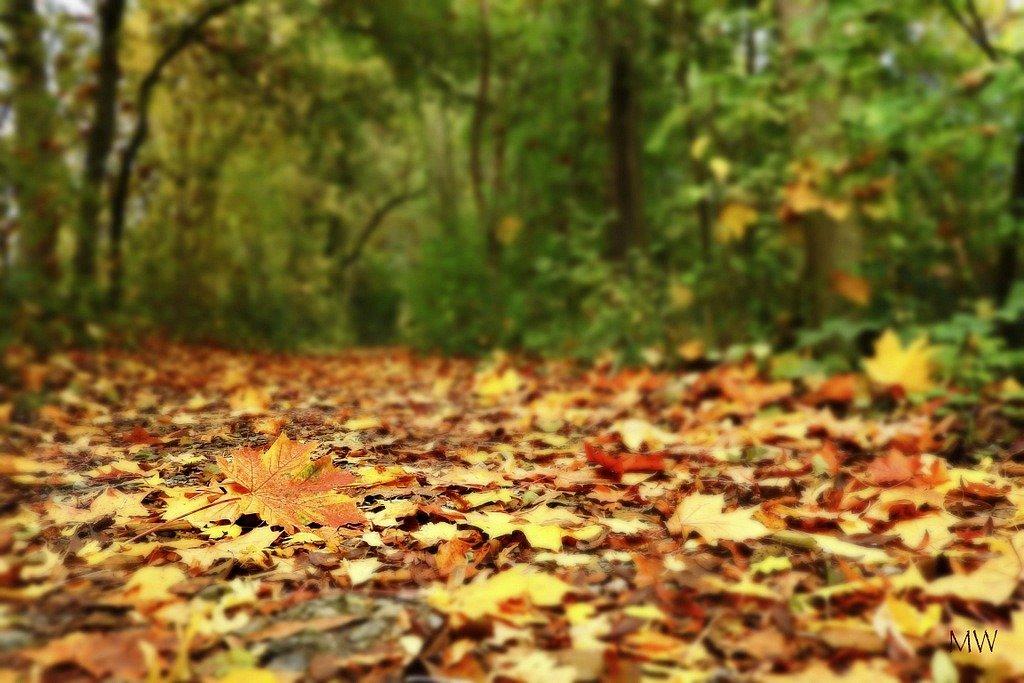 2015-10-14 phenomenon autumn leaf color  by mona65