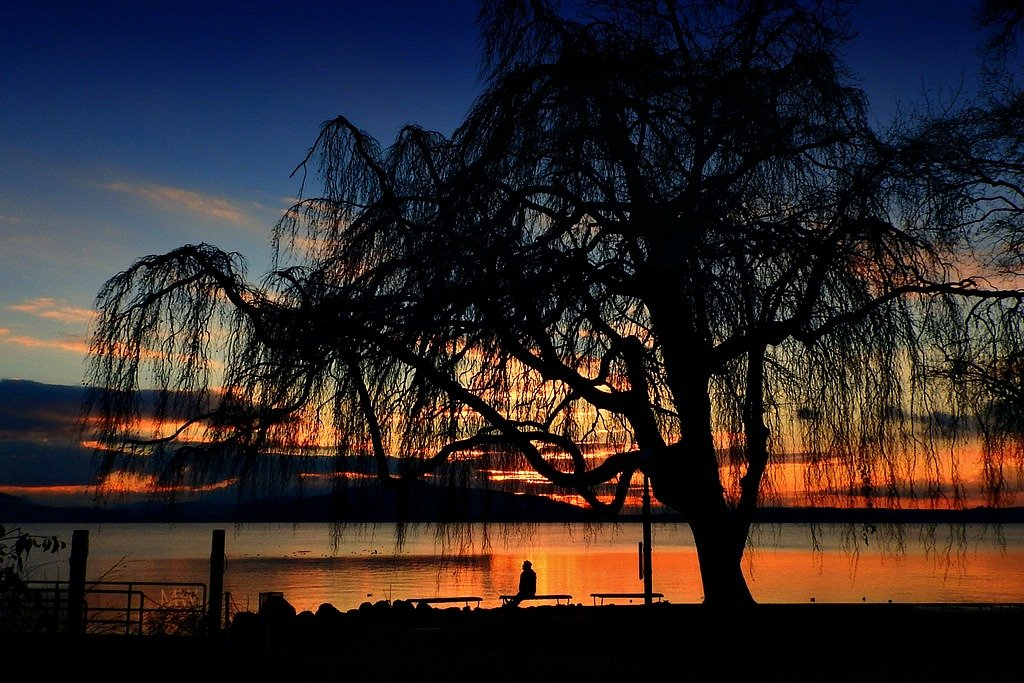 2015-11-23 weeping willow silhouette by mona65