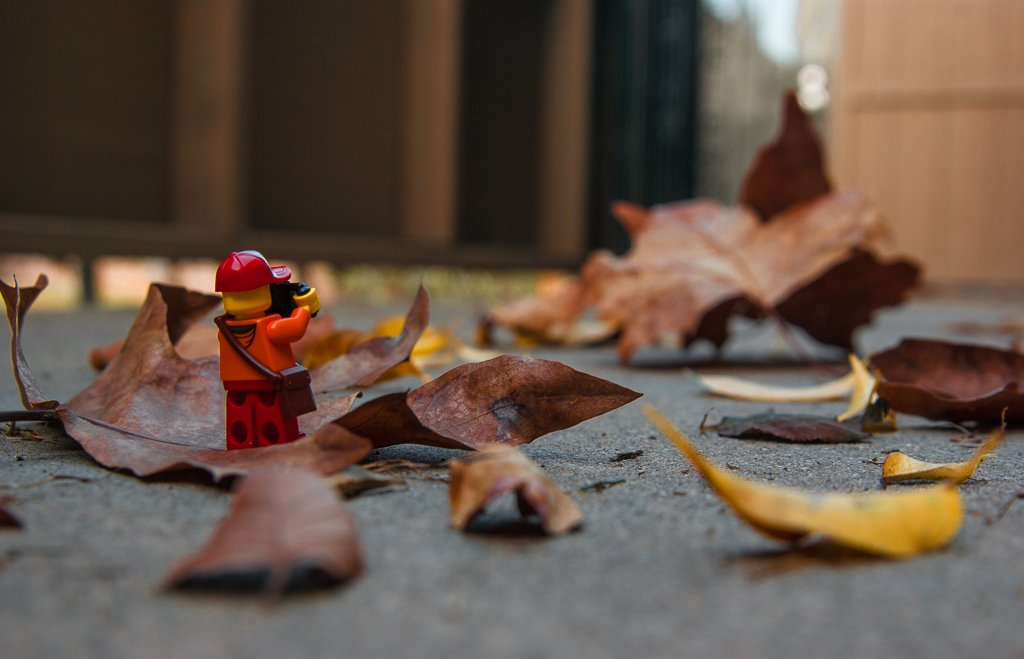 (Day 284) - Autumn is What You Make It by cjphoto