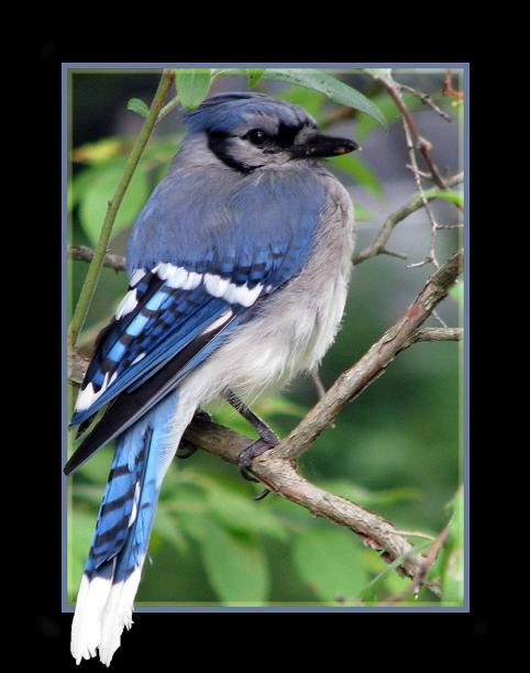Blue Jay Way by maggie2