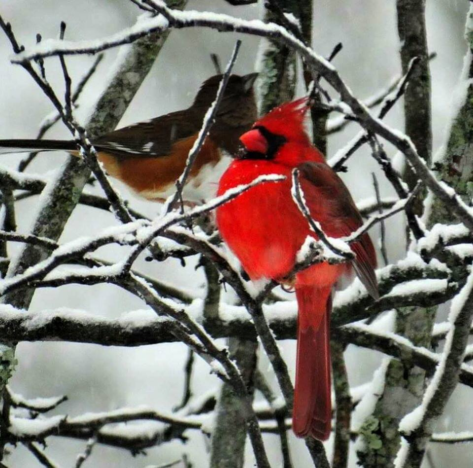 Sharing The Icy Branches by moviegal1