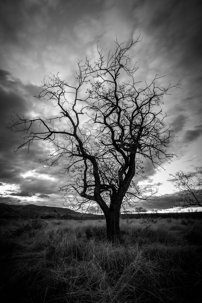 The Snag - B&W by pflaume