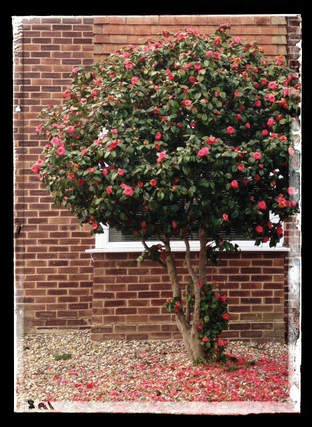 Tree in bloom by denidouble