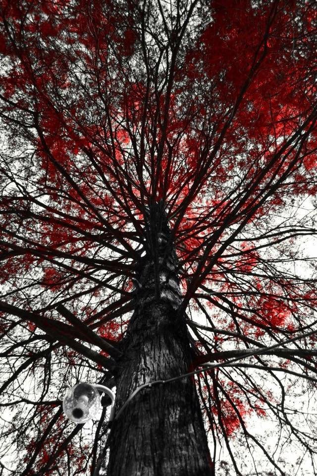 Red Tree by patopeters
