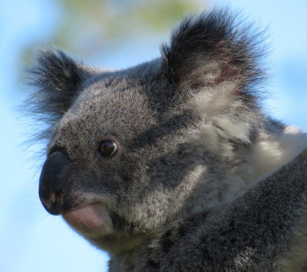 over where? by koalagardens