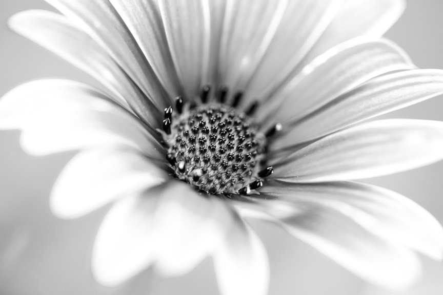 2016 09 06 - Daisy by pixiemac