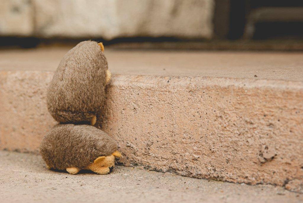 (Day 212) - Hedgehog Harmony by cjphoto