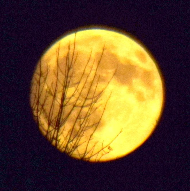 Yellow moon by bruni