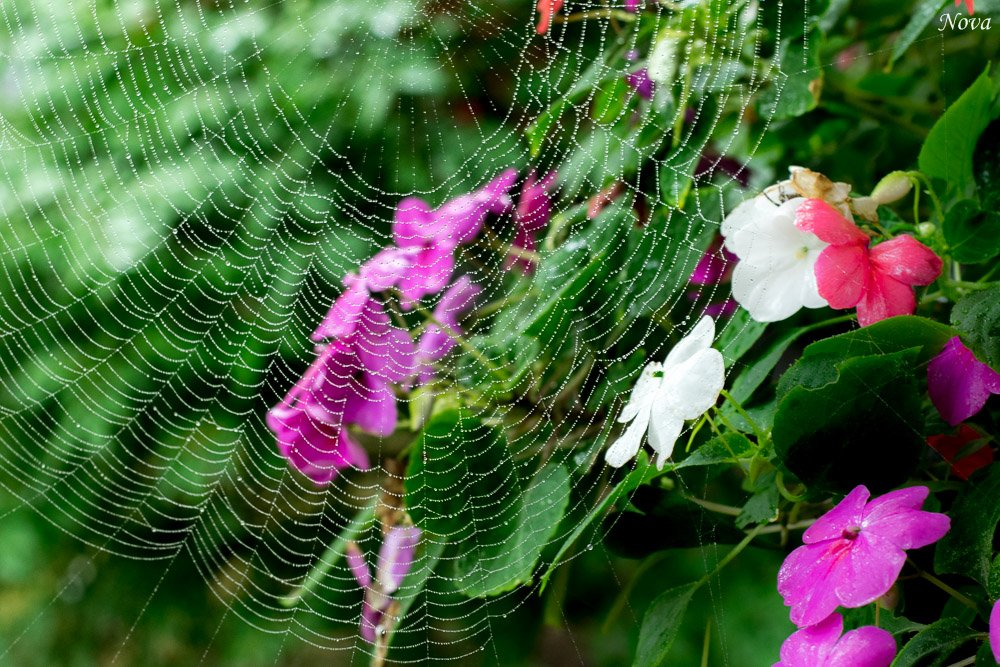 Web and blooms by novab