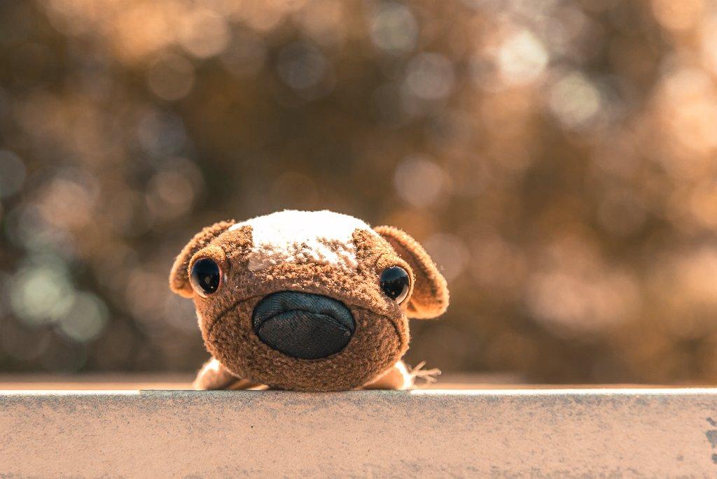 (Day 225) - Puppy Dog Eyes by cjphoto