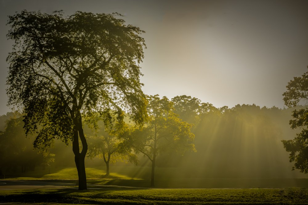 early morning filtered light by jackies365